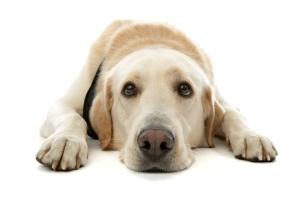 Who's a good boy? Who's a woogums? Who's a li'l poopy soul?