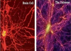 brain.universe513