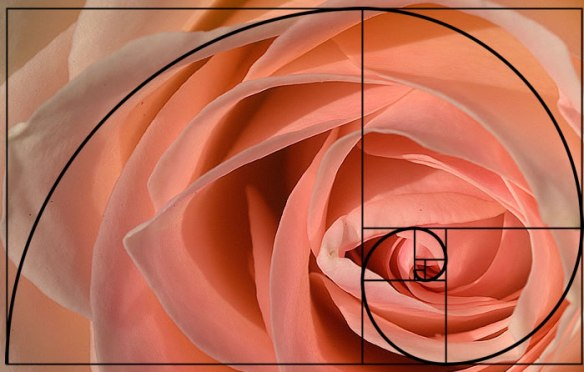 examples-of-the-golden-ratio-you-can-find-in-nature-84791